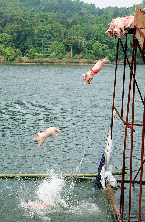 """Trung Quốc dùng """"lợn bay"""" mua vui cho khách du lịch 2"""