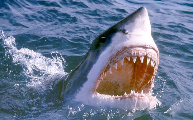 Một ngư dân nhanh trí thoát khỏi hàm cá mập khổng lồ 1