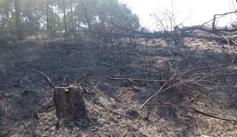 Hoảng hồn phát hiện hai người đàn ông cháy đen trong rừng 1