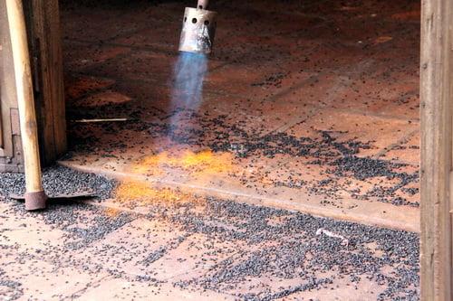 Vì sao nhà bị bọ đậu đen bâu kín? 4