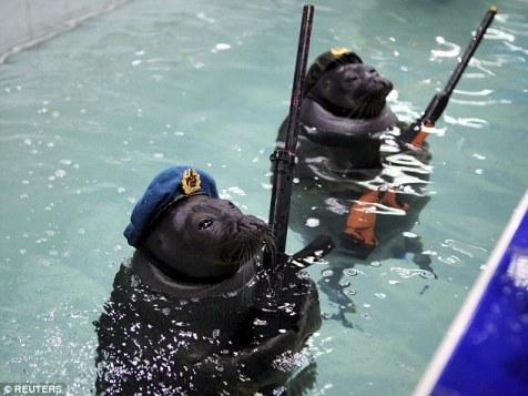 Video: Hải cẩu bắn súng nước, giương cờ mừng Ngày Chiến thắng 1
