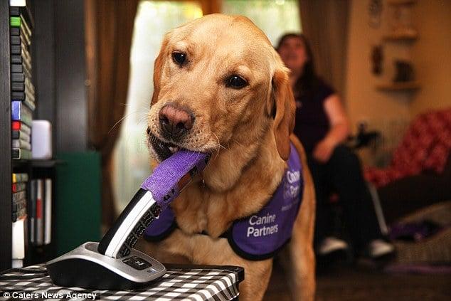 Chú chó thông minh giúp chủ thay quần áo, trả tiền và bật ti vi 3