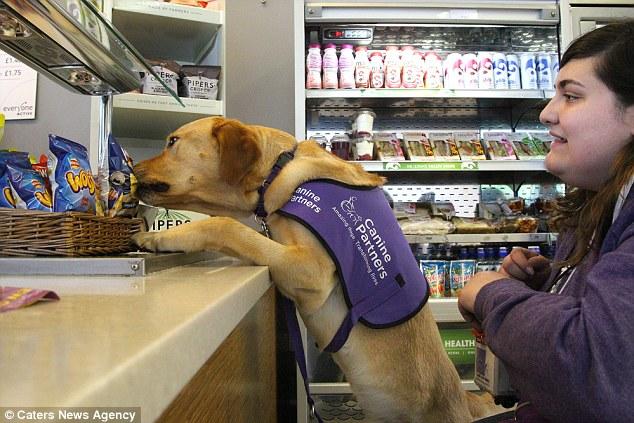 Chú chó thông minh giúp chủ thay quần áo, trả tiền và bật ti vi 5