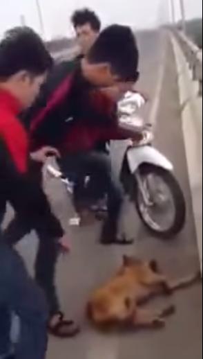 Triệu tập 7 thanh niên hành hạ chó đến chết trên cầu Vĩnh Thịnh 1