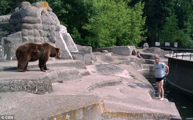 Thót tim người đàn ông liều mạng leo vào chuồng trêu gấu dữ 1