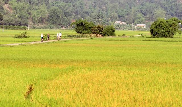 Mai Châu Ecolodge – Khu du lịch xanh giữa thiên nhiên tuyệt đẹp 8
