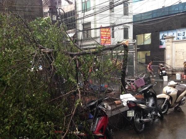 Hà Nội: Đường phố ngổn ngang sau cơn giông lớn dị thường 1