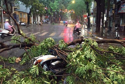 Hà Nội: Đường phố ngổn ngang sau cơn giông lớn dị thường 4