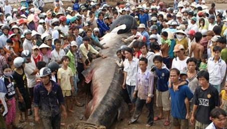Điểm danh những thủy quái từng sa lưới ngư dân Việt có giá khoảng 200 triệu đồng 7
