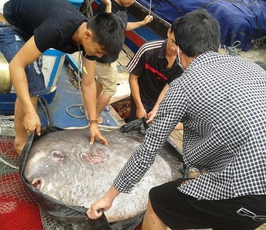 Điểm danh những thủy quái từng sa lưới ngư dân Việt có giá khoảng 200 triệu đồng 2
