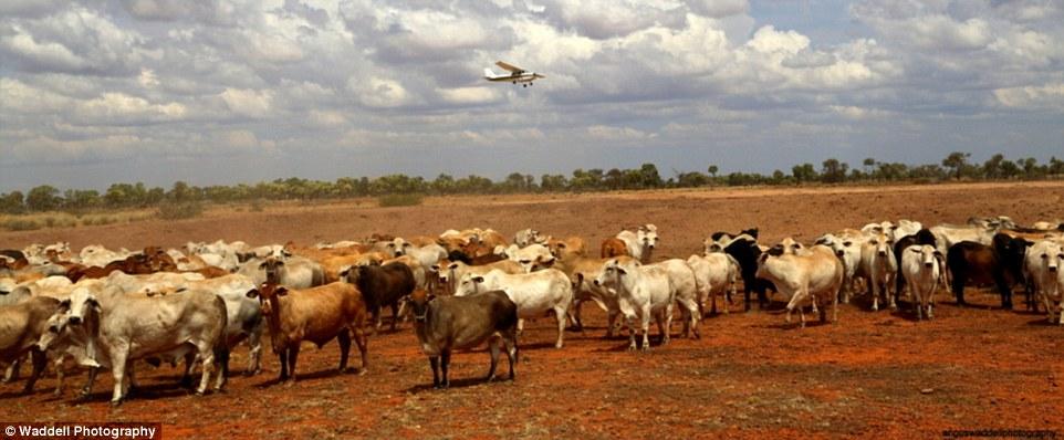 Cận cảnh khu đất đắt nhất hành tinh giá 7 nghìn tỉ 6