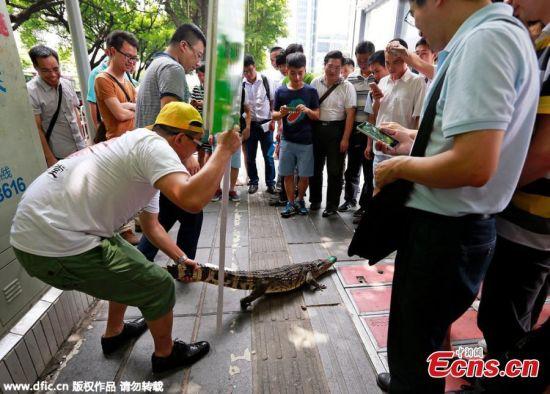 Trung Quốc: Tuyển việc bằng thử thách hôn cá sấu 2
