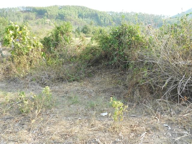 Phát hiện xác chết đang phân hủy trong bụi cây 1
