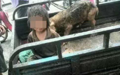 Bé trai 7 tuổi phải sống trong chuồng lợn  1