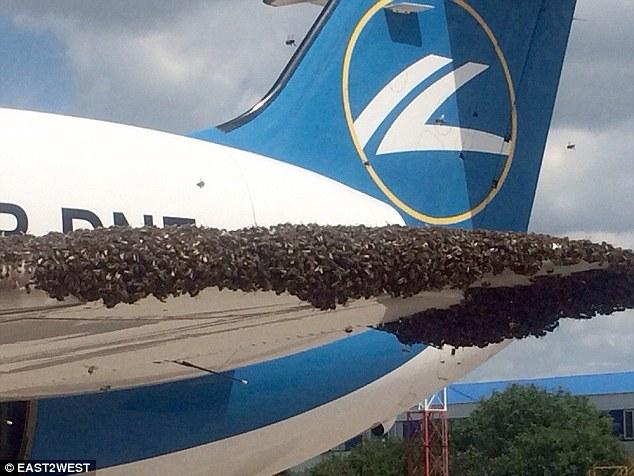 Hàng nghìn con ong tấn công máy bay chở khách tại Nga 1