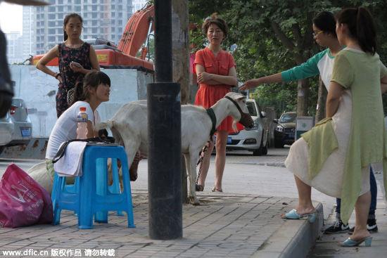 Trung Quốc: Người dân đổ xô mua sữa dê tươi ngay trên vệ đường 2