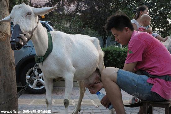 Trung Quốc: Người dân đổ xô mua sữa dê tươi ngay trên vệ đường 3
