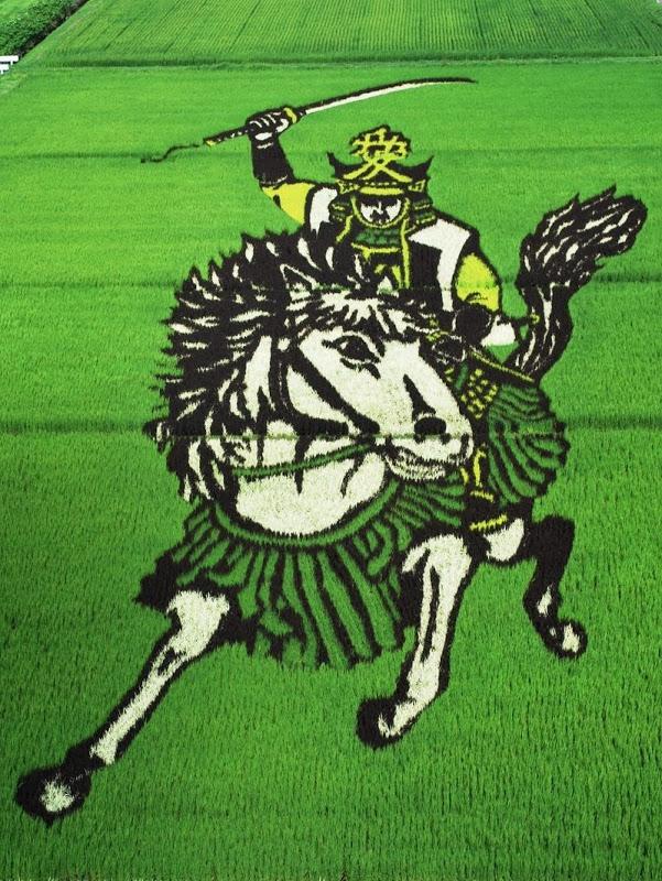 Những bức tranh độc đáo trên cánh đồng lúa ở Nhật Bản 3