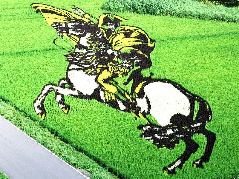 Những bức tranh độc đáo trên cánh đồng lúa ở Nhật Bản 5