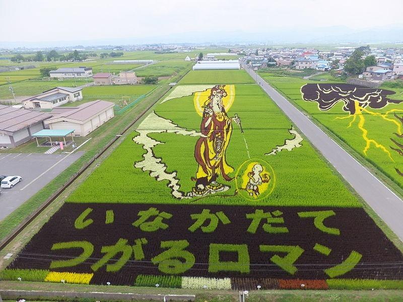 Những bức tranh độc đáo trên cánh đồng lúa ở Nhật Bản 4