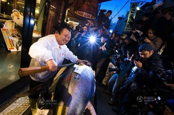Vì sao đại gia trả 40 tỉ cho 1 con cá ngừ 222 kg? 1