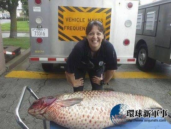 Bất ngờ bắt được cá chép khổng lồ trong rãnh nước thải 1