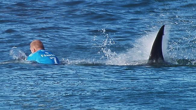 VĐV lướt sóng bị cá mập tấn công ngay trên sóng truyền hình 2