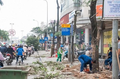 Vụ chặt cây xanh: Hàng loạt cán bộ bị giáng chức, chuyển công tác 1