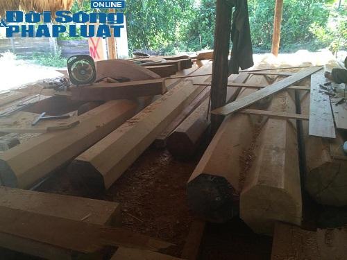Cận cảnh thủ đoạn biến gỗ lậu thành gỗ hợp pháp 1