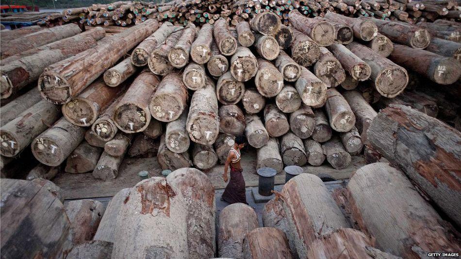 153 lâm tặc Trung Quốc bị Myanmar bỏ tù chung thân 1