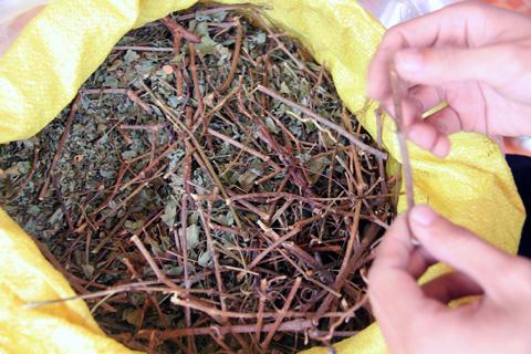 Những loại thảo dược đắt như vàng đại gia săn lùng 5