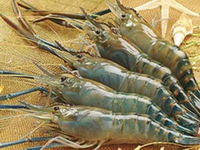 Cách nấu lẩu mắm thơm ngon đúng vị miền Tây Nam Bộ 2