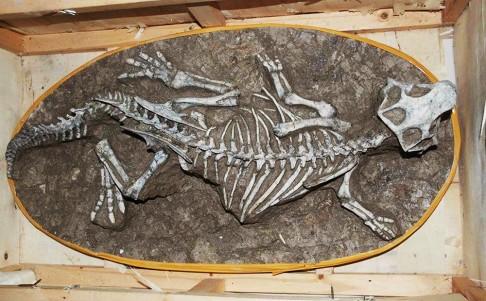 Phát hiện 1 bộ xương và hơn 200 trứng khủng long hóa thạch trong nhà dân 2