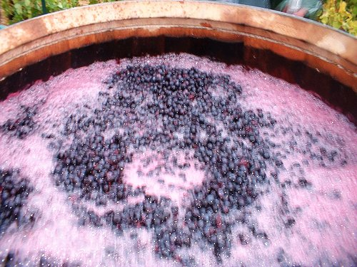 Cách làm rượu nho thơm ngon đúng vị truyền thống tại nhà 4