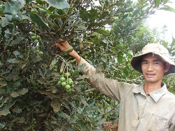 Những cây trồng mang lợi nhuận tỷ đô tại Việt Nam 3