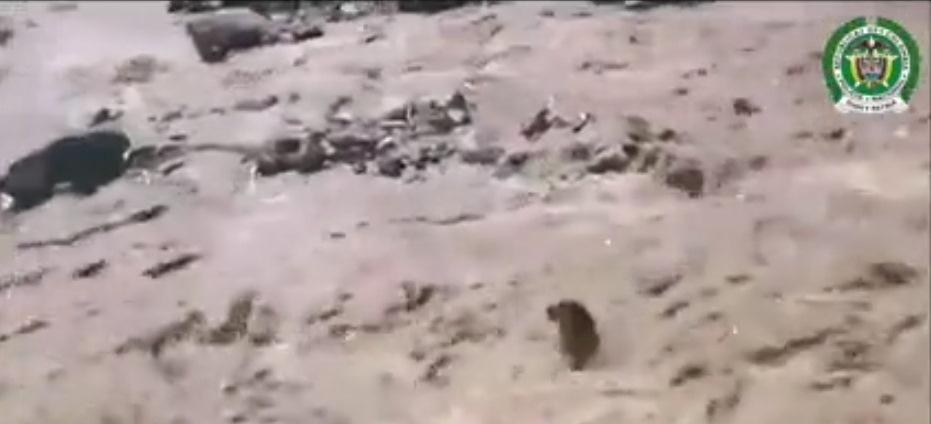 Video: Chú chó được cứu giữa dòng lũ dữ gây xúc động mạnh 1