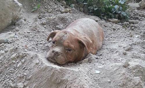 Chú chó bị chủ chôn sống tại Pháp khiến dư luận phẫn nộ 1