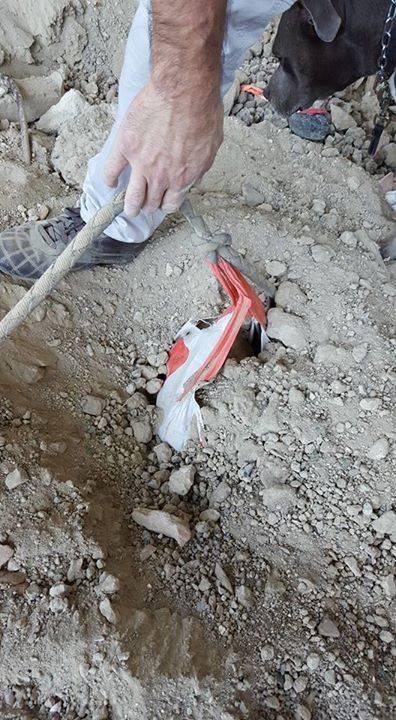 Chú chó bị chủ chôn sống tại Pháp khiến dư luận phẫn nộ 2