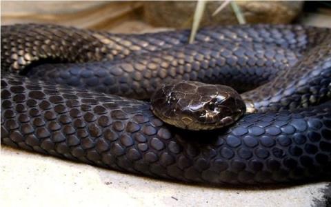 Cận cảnh những đảo rắn độc nổi tiếng, 'thủ phủ' của rắn hổ khổng lồ 1