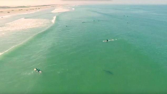 Video: Thót tim cá mập trắng khổng lồ bơi ngay cạnh người lướt sóng 1