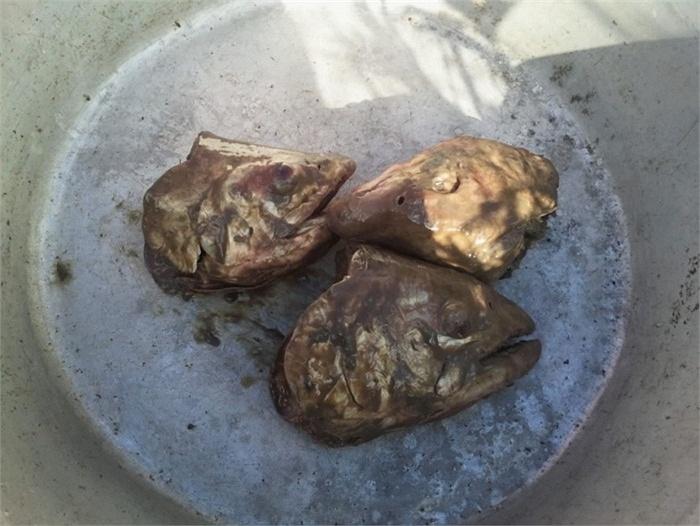 Hình ảnh Pho mát giòi, súp dơi khiến người ăn đau tim số 6