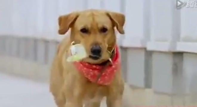 Clip chú chó xin hoa đến thăm mộ chủ khiến hàng triệu trái tim thổn thức 1