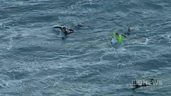 Du khách 'chiến đấu' với cá mập để thoát thân 1