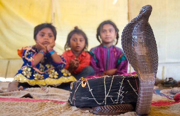Khám phá bộ tộc Ấn Độ có biệt tài thôi miên rắn 12