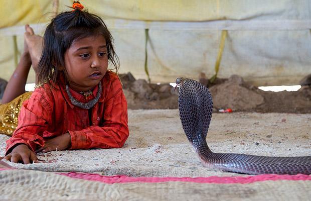 Khám phá bộ tộc Ấn Độ có biệt tài thôi miên rắn 5