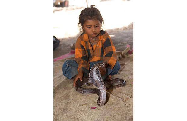 Khám phá bộ tộc Ấn Độ có biệt tài thôi miên rắn 7