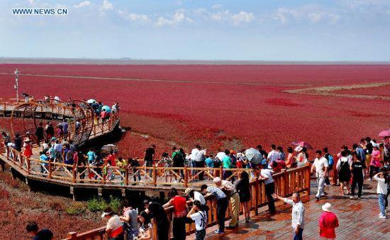 Du khách thích thú đến ngắm Bờ Biển Đỏ ở Trung Quốc 1