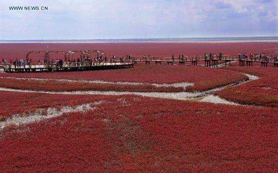 Du khách thích thú đến ngắm Bờ Biển Đỏ ở Trung Quốc 3