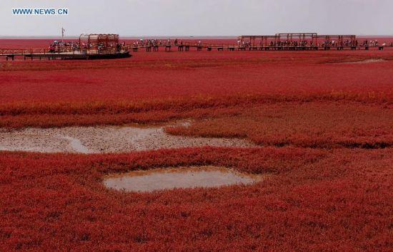 Du khách thích thú đến ngắm Bờ Biển Đỏ ở Trung Quốc 4