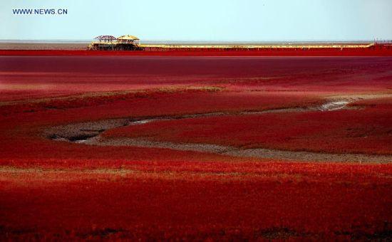 Du khách thích thú đến ngắm Bờ Biển Đỏ ở Trung Quốc 6